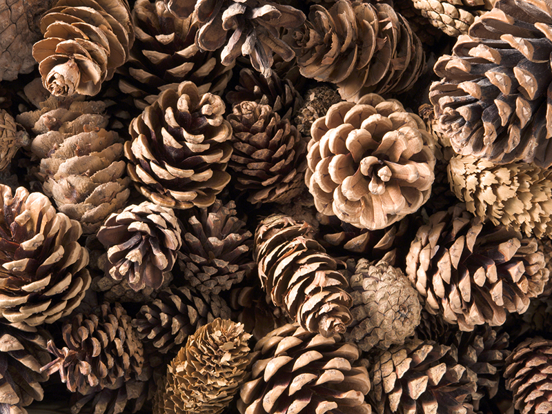 Pinecone name holders for the table